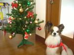 2007 クリスマス 008.jpg